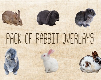 Set of 6 PNG Bunny Rabbit Overlays, Instant Download.