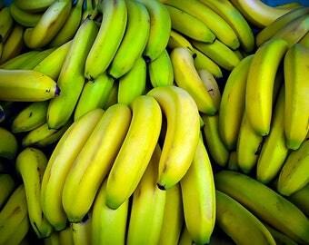 Dwarf Cavendish Banana Tree 3 Gallon