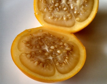 Naranjilla - Solanum quitoense - Tropical Fruit - 100 seeds!