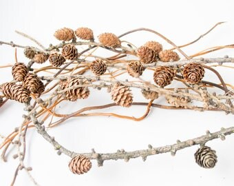 Branches with pine cones, wood kit, home décor, natural material, brown cones, willow branches+branches with pine cones, home decor,