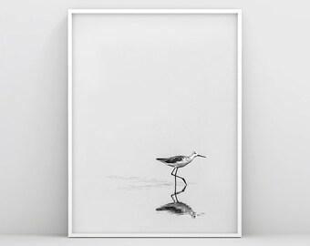 Black and White Bird Prints, Bird Wall Art, Minimalist Bird Print, Printable Bird Photo, Lonely Bird Walking, Bird Wall Decor, Scandinavian