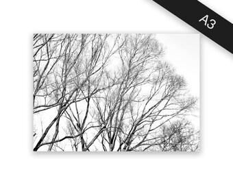 Treetops - art print/photo print A3