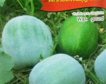75 Organic Seeds Wax / Ash / White / Winter Gourd / Melon Chinese Preserving Melon FREE SHIPPING