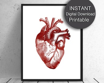 Anatomical Heart Download - PRINTABLE Art Red Heart Print Human Heart 16x20, 8x10, A4 Printable Watercolor