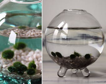 Glass Marimo Aquarium