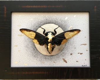 """Cicada Art- Framed - """"Full Moon"""""""