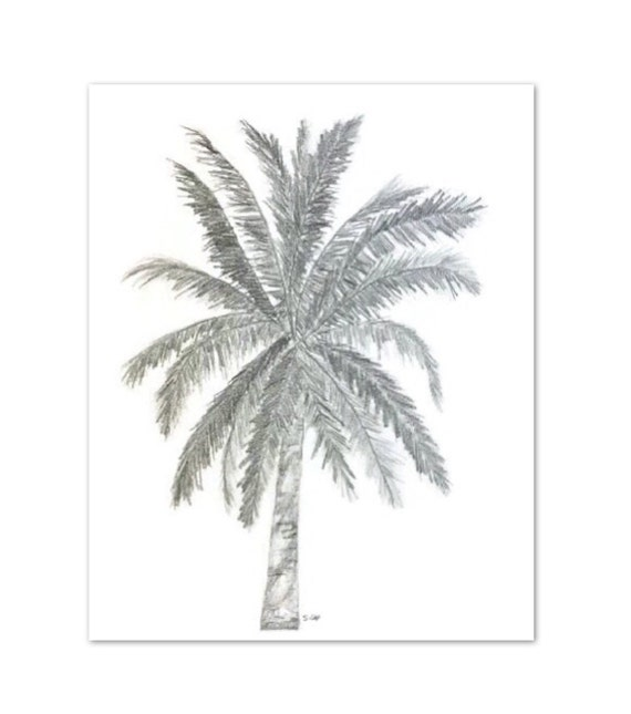 Original Pencil sketch Palm tree drawing Palmtree Tropical  Hawaiian Palm Tree Drawings
