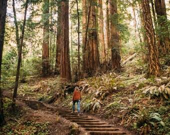 Muir woods // san francisco // fine art // photography // print