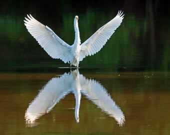 7.2 Megapixels Digitail Photo: Great Egret - Reflection on a Pond