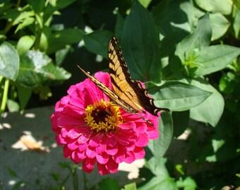 Landed on a Flower