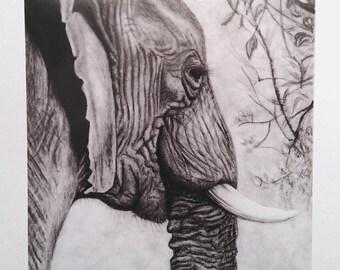 Elephant Art Print -  Wildlife Art