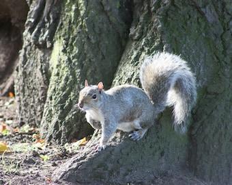Squirrel photograph (digital download)