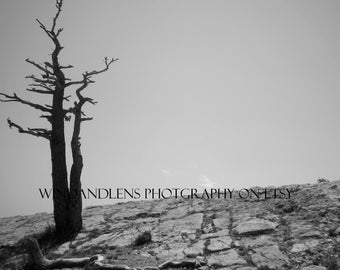 Tree Photography - Digital Download - Black and White Photo of Dead Tree at the Edge of a Cliff - Unique Wall Decor -Modern Southwestern Art