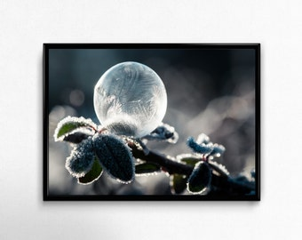 winter, frozen bubble, Photo, Photoprint, Art, Printart - Poster, Acrylic, PVC foamboard, canvas print