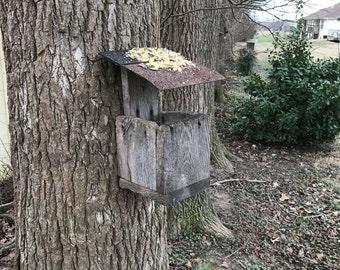 Squirrel and Bird Feeder