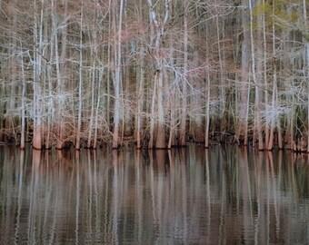 Manatee Springs Winter Reflection