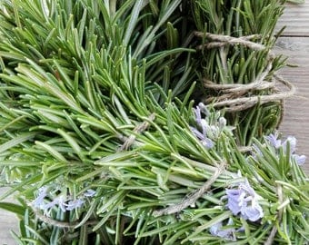 3 Rosemary organic, 3bouquet rosemary twig, rosemary for seasoning, rosemary cooking, Mediterranean rosemary, rosemary branches