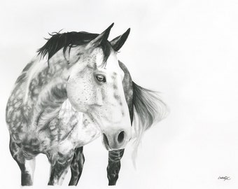 "Horse drawing in charcoal ""Fred"" 30X40"