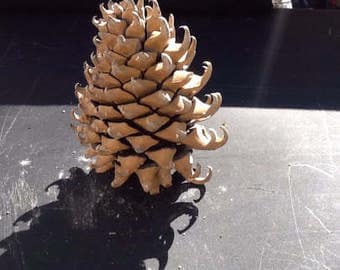 """9"""" Coulter Pine Cone (Widowmaker)"""