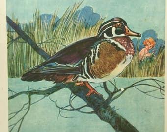 WOOD DUCK Dan Smith Nature Series Art Print