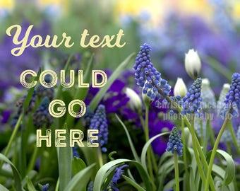 Blue Spring Flower stock photo