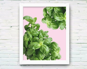 Basil Herb Art Print, Greenery Photo on Pink, Minimal Leaf Plant Photography