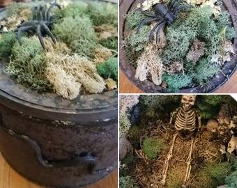 Creepy Moss Fairy Garden With Skeleton, Unique Halloween Decor