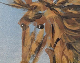 Wild Stallion Portrait