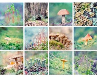Forest Floor Mini Portfolio, Nature Photography, 5x5 Photo Set, Woodland Prints, Mushrooms, Fungi, Moss, Lichens, 5x5 Print Set