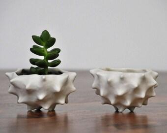 Blue Tiny Conch Planter Bowl -  Blue White Modern Ceramic Indoor Planter Bowl Modern Planter Ceramic Pot