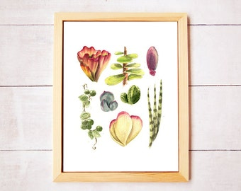 Succulent Cuttings Watercolor Art Print - Digital Download