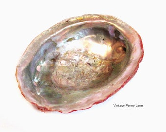 Abalone Shell Bowl, Smudge Pot, Decorative Seashell Specimen