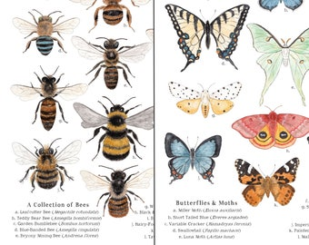 8 x 10 Bees and Butterflies and Moths Print Bundle - Entomology, Montessori, Educational, Natural History, Insects, Nature Study