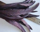 COQUE Tail Feathers  Loose / Dark plum, aubergine /  207