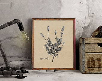 Instant Download Printable Art, Vintage Herbs, Three Background Choices + Dictionary Page, DIY Printable – Vintage Lavendar