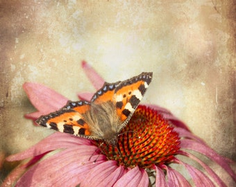 Butterfly Art Print - Rustic Wall Décor - Nature Photography