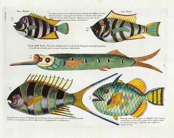 Fish Print Book Plate SALE Buy 3, get 1 Free