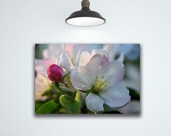 Apple Blossom In Bloom,  Flower Photography, White Flower Art Print, Nature Art, Flower Art on Canvas by Liz Allen