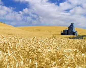 Harvest Time - The Palouse - Wall Art - Photography - Fine Art Photography -  Outdoors - Summer - 11 x 14 prints - Prints