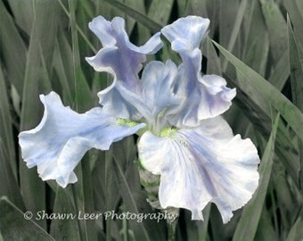 Hand Painted Photograph Blue Iris