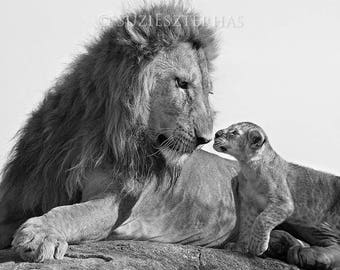 Baby Animal Card, BABY LION and DAD Greeting Card - Blank Card, Baby Animal Photography, Wildlife Photography, New Dad, Fathers Day