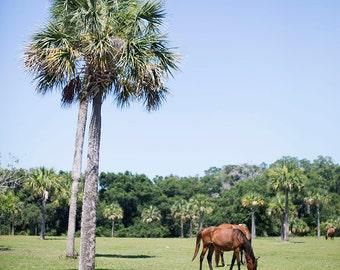 Wild Horses on Cumberland Island - Fine Art Photograph, Spring, Green, Nature, Room Decor, Wall Art