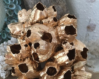 Metallic Gold Golden Barnacle Cluster Sculpture, for Display, Art, Sea Life/ Coastal Living/ Seashells Home Decor/ Coastal Home Decor/ Metal