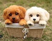 Two little puppies golden retriever