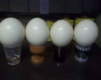 4 Large Ostrich eggs - vintage - cleaned in their natural state; ready to use AMAZING!