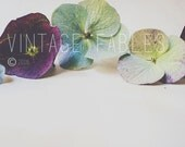 Stock Photo - Social Media Photo  - Hydrangea - Instagram Photo - Flower Photo - Styled Stock Photography - Mockup - Wedding Invitation