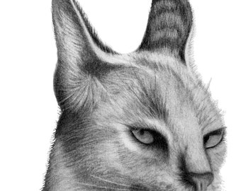 Caracal - 11 x 14 Matted Print