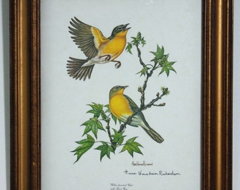 Yellow-Breasted Chat with Sweet Gum, Signed Print by Anne Worsham Richardson - Framed - 1974