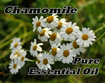 ROMAN CHAMOMILE Essential Oil (1/2 or 1 oz size) Pure, Organic, Full Strength