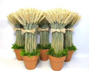 Potted Wheat Sheaf, Dried Floral Arrangement, French Country Wheat Sheaves